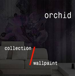 wallpaint / orchid