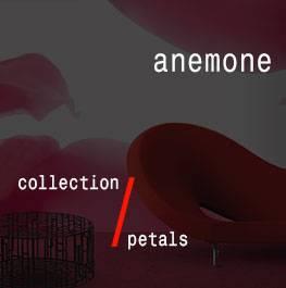 petals / anemone