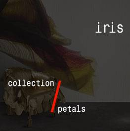 petals / iris