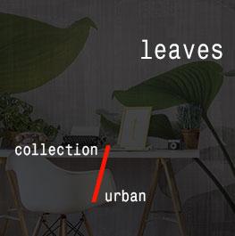 urban / leaves