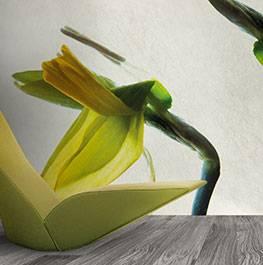 petals / narciso